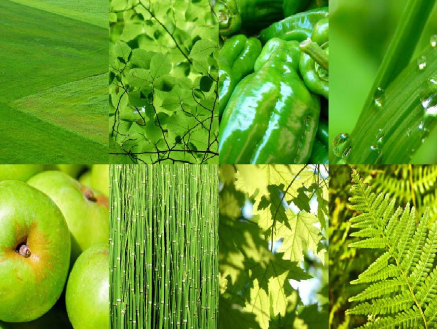 """""""Grün"""" ist die Trendfarbe 2017"""