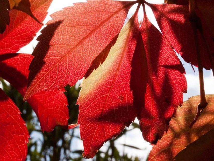 Bordeaux - Unsere Farbe für den Herbst