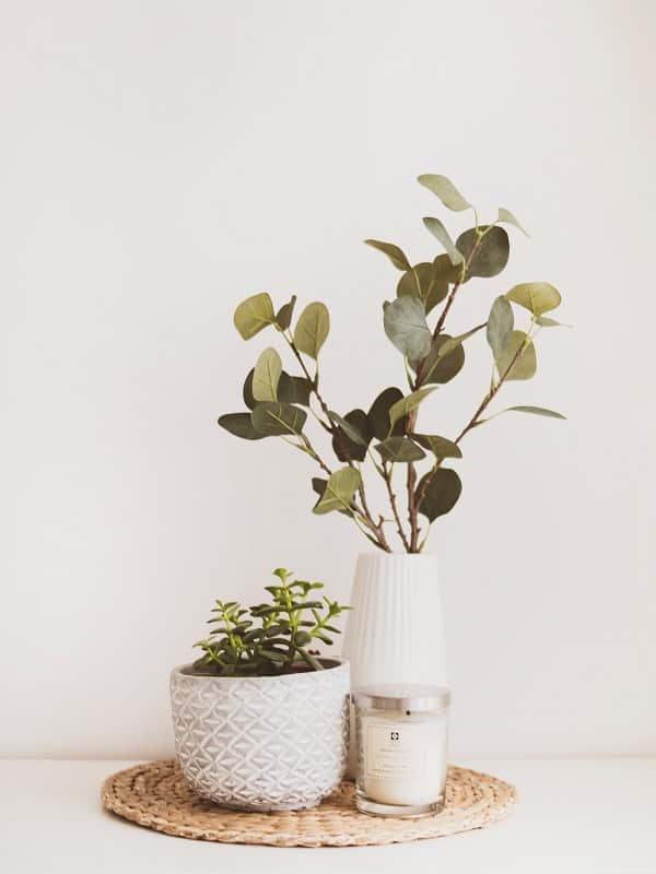 gruenpflanzen-arrangement