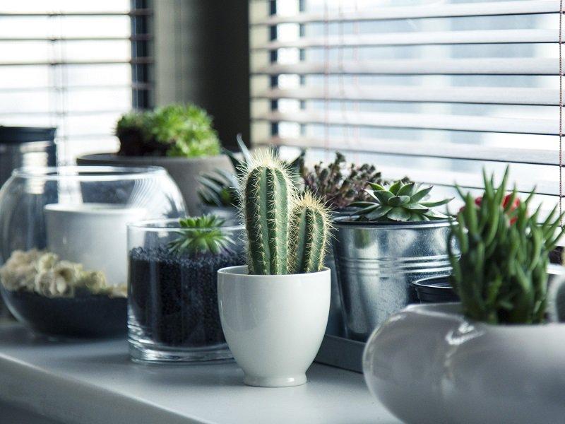 Zimmerpflanzen Raumgestaltung