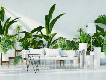 Natürlich (und) schön: Zimmerpflanzen!