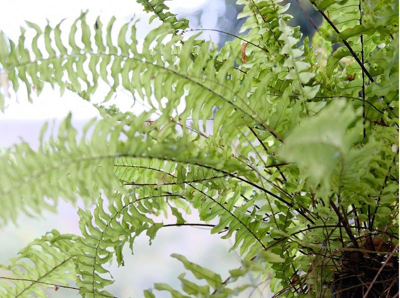 grunepflanzen im zimmer