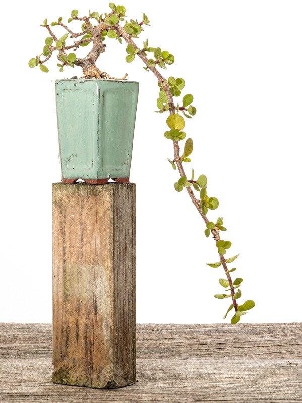 pflanzen dekoration
