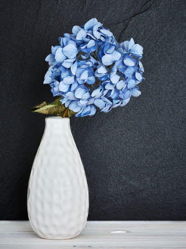 blaue-hortensie-weiße-vase