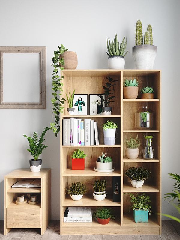 Pflanzen Regal dekorieren
