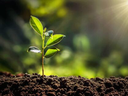 5 Tipps für das nachhaltige Wohnen