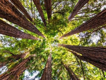 Wie funktioniert ein nachhaltiger Wald?