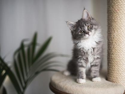 Möbel, die Ihre Katze lieben wird
