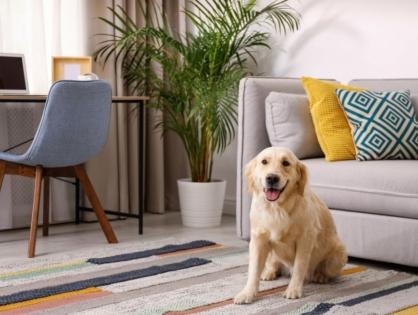 Wohnen mit Hunden – so fühlen sich die Vierbeiner pudelwohl