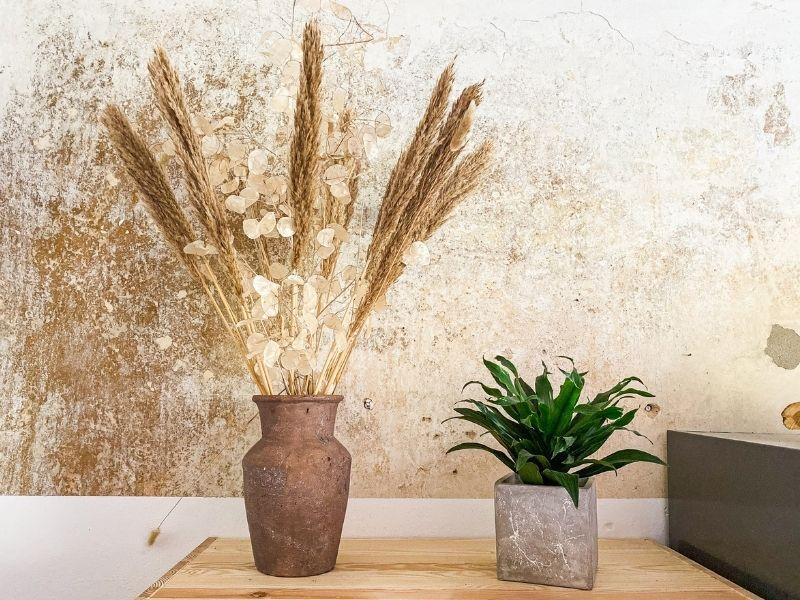 Gräser als Trockenpflanze