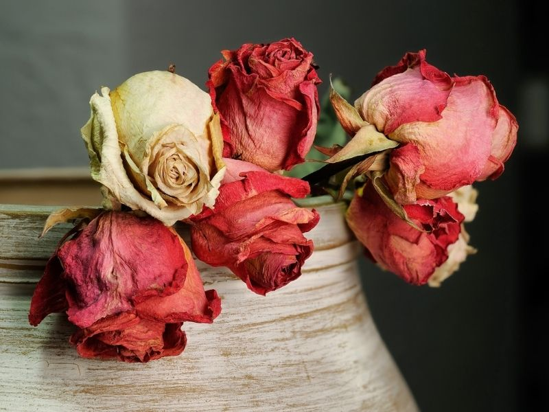 Rosen als Trockenblumen